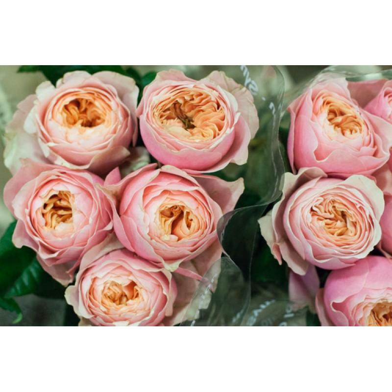 Цветы оптом пионы и английская роза москва — photo 2